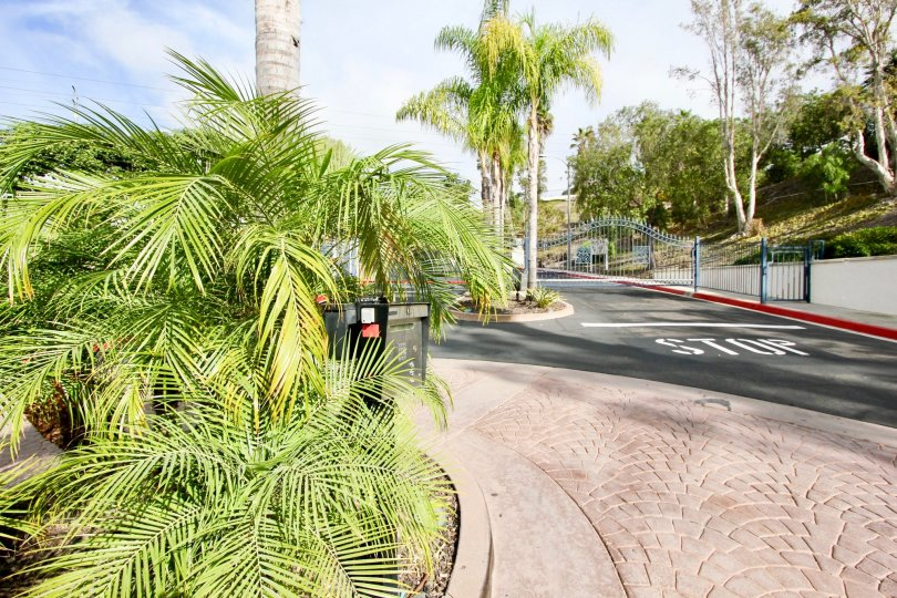 Palm trees line the streets in beautiful Oceanside, California