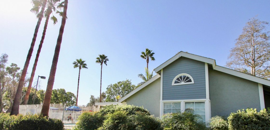Park Circle Community Apartments in Oceanside, California, Pool with Palm Trees
