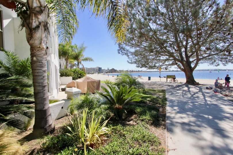 A Sunny day with beautiful view of trees near the beach at Bay Contempo in Pacific Beach