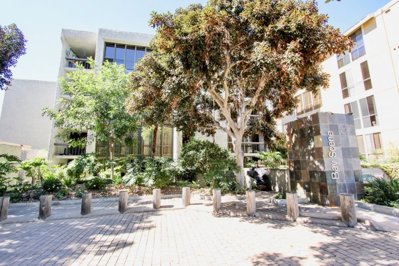 In Bay Scene, Trees and plants are placed with apartments of city Pacific Beach