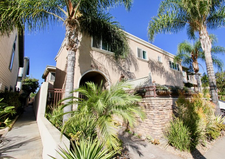 A beautiful home shaded by large palm trees at Crown Morrell in Pacific Beach, California