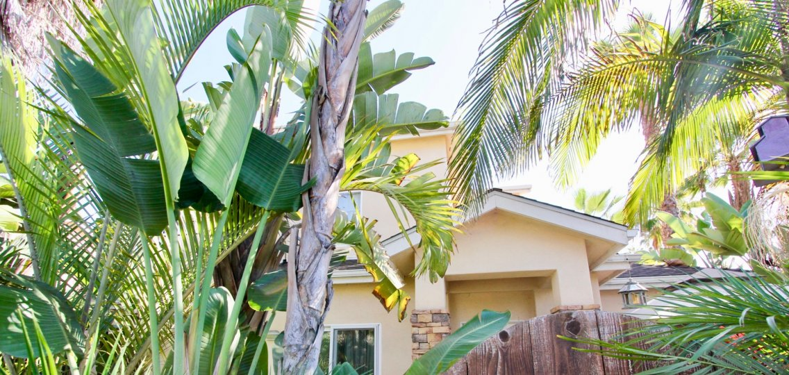 Tropical landscaping with palms at the Diamond and Lamont in Pacific Beach, California