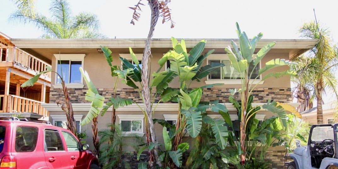 Luscious vegetation in your own front yard in Felspar Park of Pacific Beach