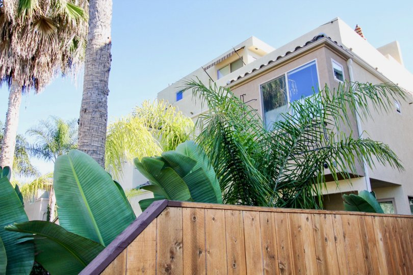 Lush landscaping at Lamont Street Townhomes in Pacific Beach, California.
