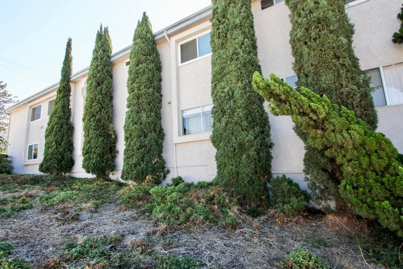 Dead grass is on the ground and tall green bushes run up the side of the Rivieran in Pacific Beach, California