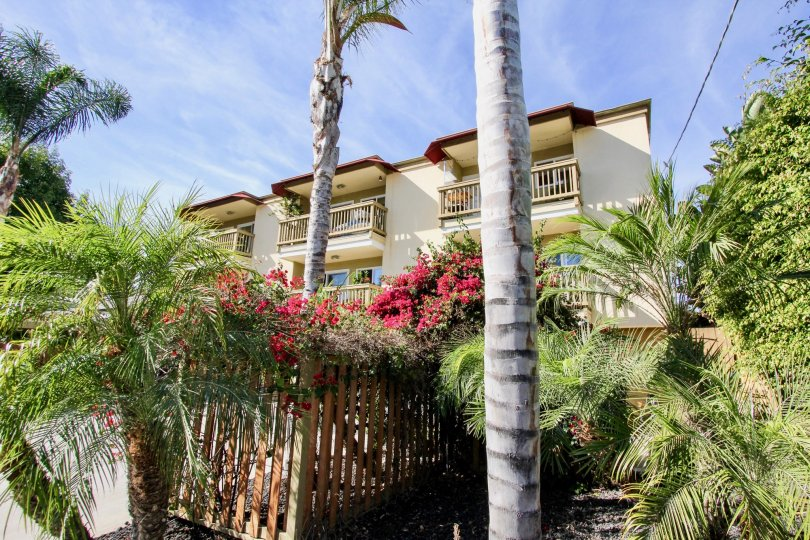 Colourful flowers surrounded with palm trees in front of villa in Sea2Bay on a sunny day of Pacific Beach