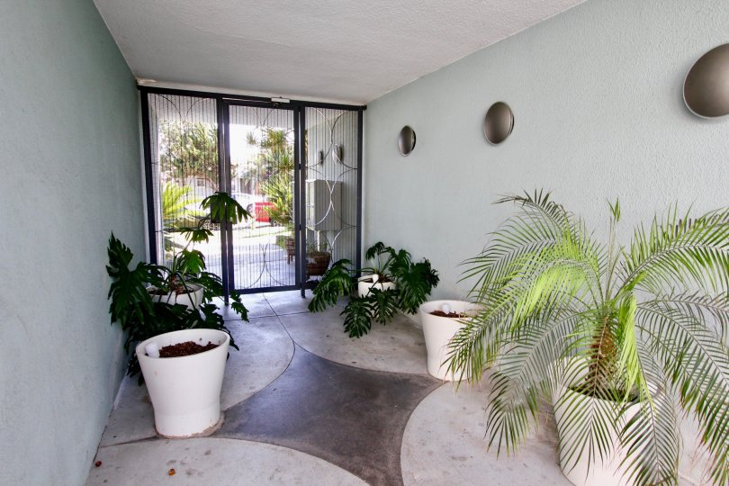 A view of the plants and greenery just inside the gated entrance of The Heritage on Diamond in Pacific Beach, California