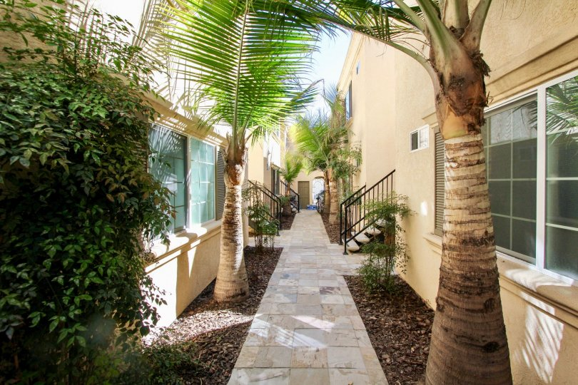 Palm tree lined walkways to staircases at Thomas Avenue Condominiums in Pacific Beach, California