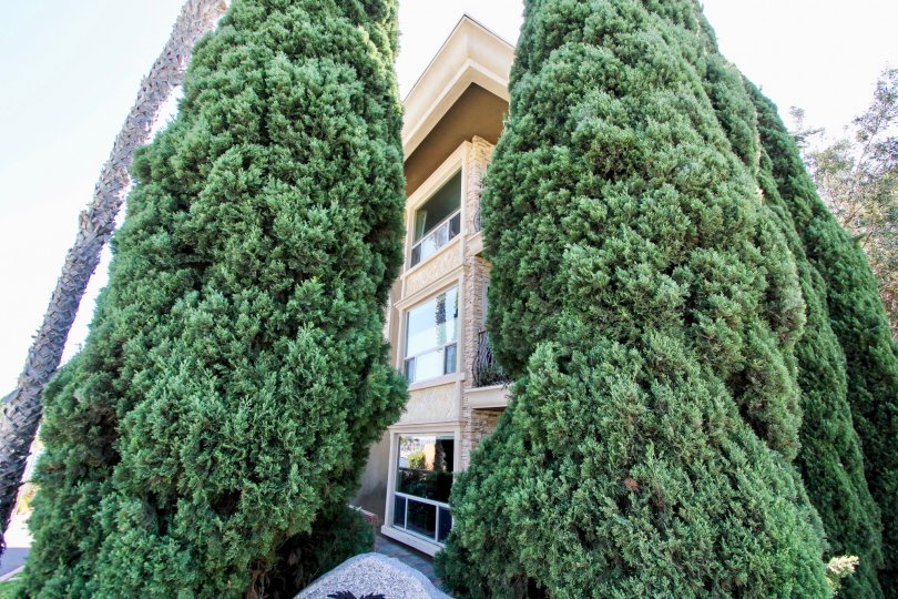 Large pine trees beside a three story building with balconies, at 2955 in La Playa, Point Loma, California.