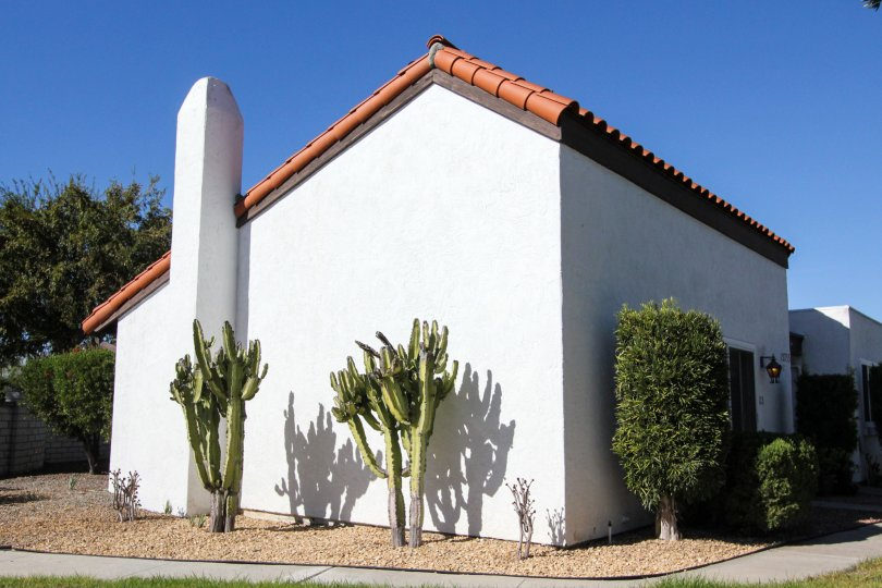 A sunny day in Haciendas has light, plant and grasses