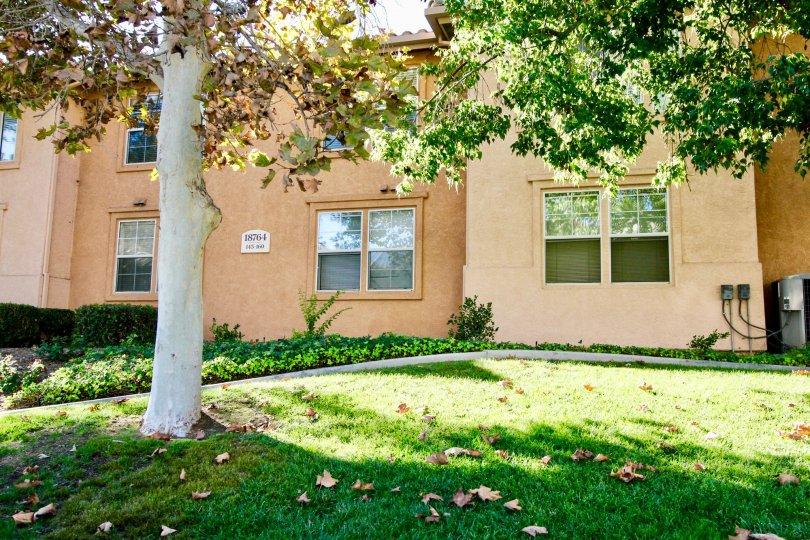 Tree near residence at Morada in Rancho Bernardo California