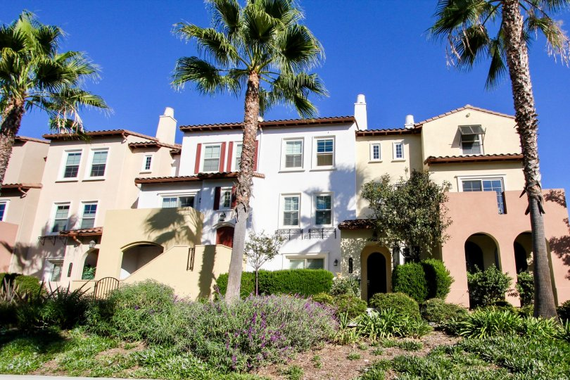 Palm trees and mansion in Calico Bluffs, San Marcos CA