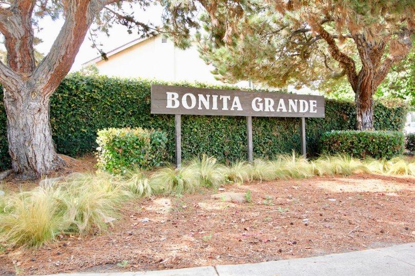 Bonita Grande  ,: Spring Valley  , California, trimmed bushed, white sky