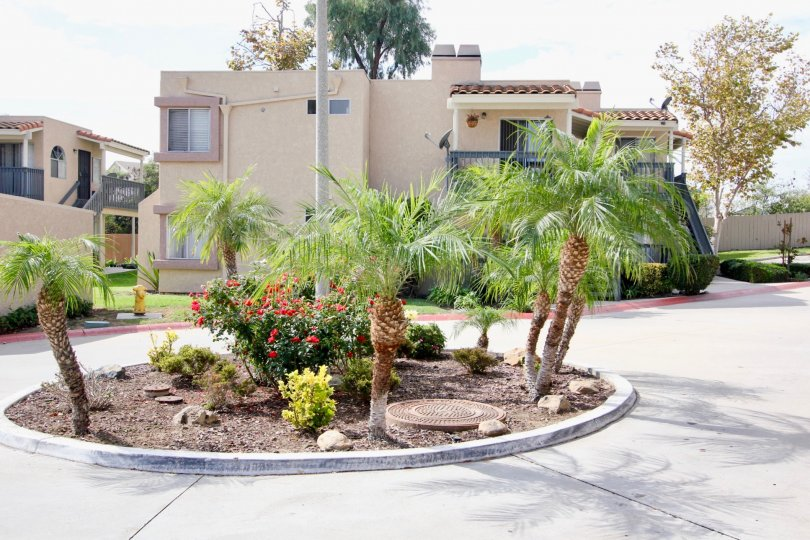 A sunny day in the area of Sweetwater Views, ouside, palm trees, flowers, condos