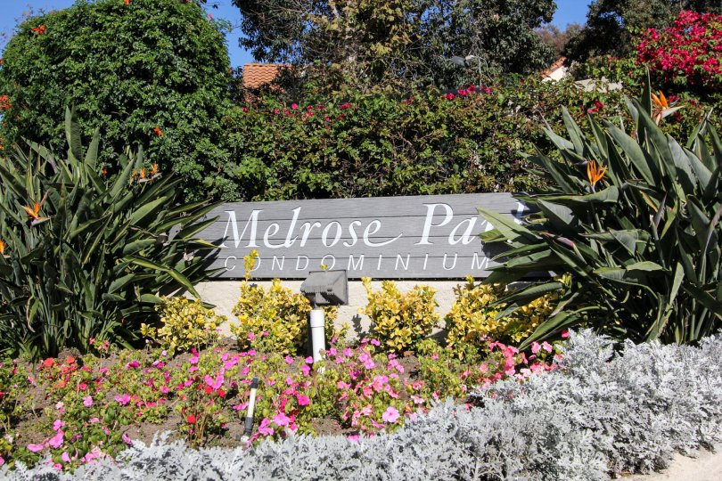 Melrose Park Vista , California, flowers, greenery, plants