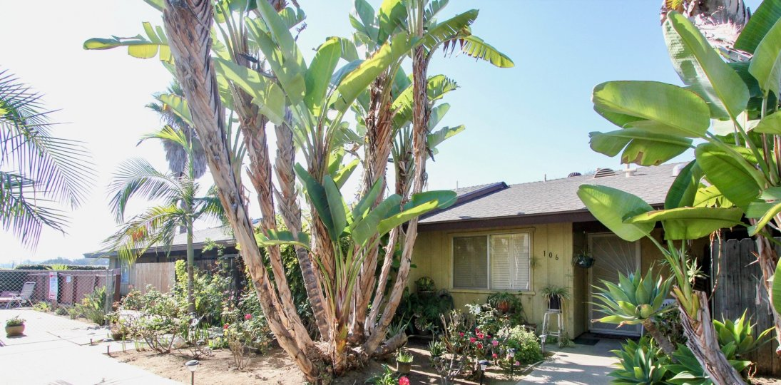 Housing with palm trees at Pine View in Vista California