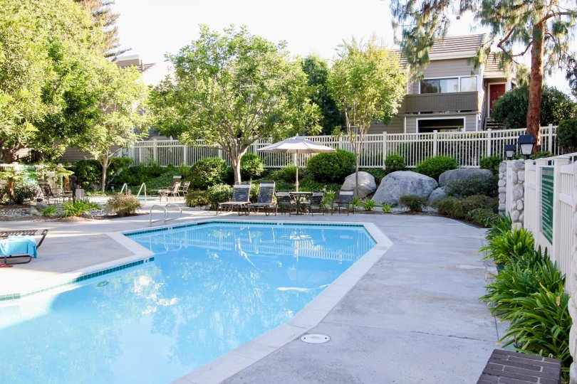 Large luxurious pool in a new garden located in the neighborhood of Shadowridge Aspens