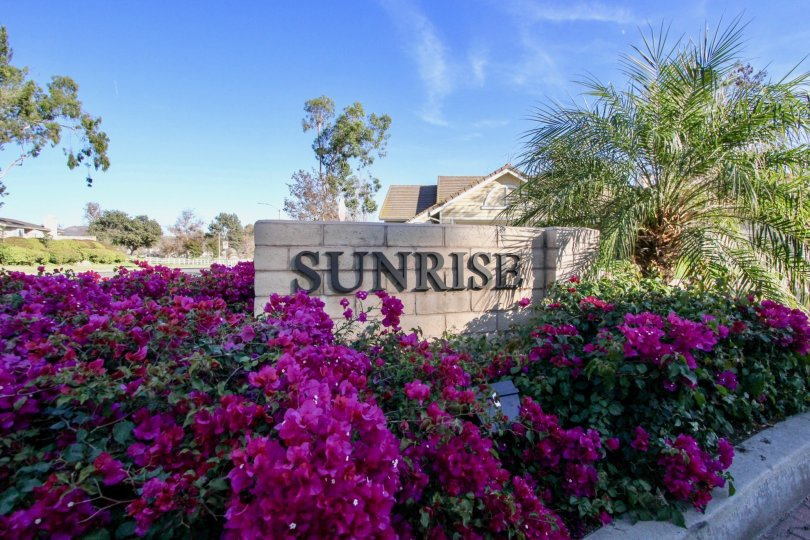 Community sign surrounded by purple flowers at Sunrise in Vista California.