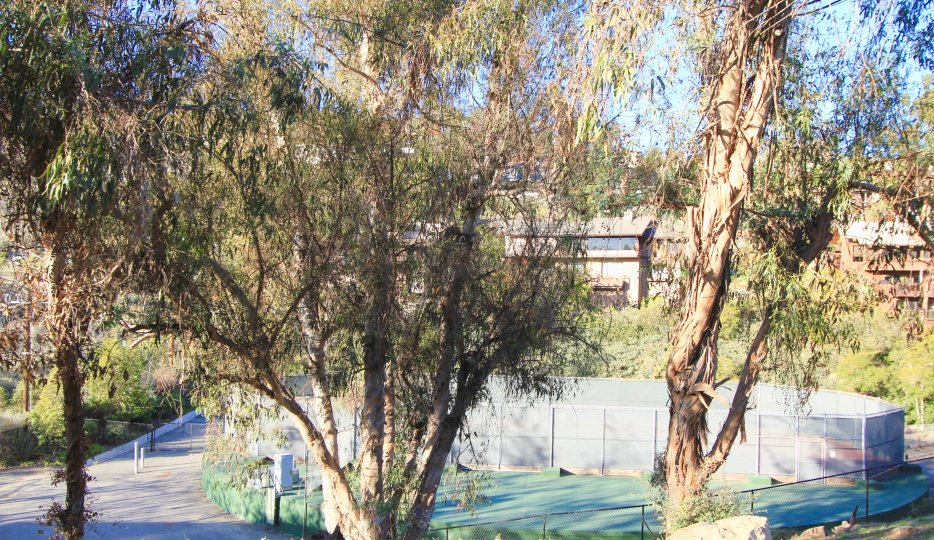 Green belt, trees and tennis court of Bluebird Canyon in Laguna Beach