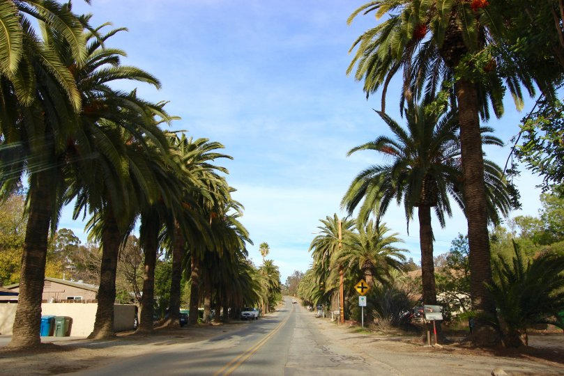 street and palm trees in Country Club Heights