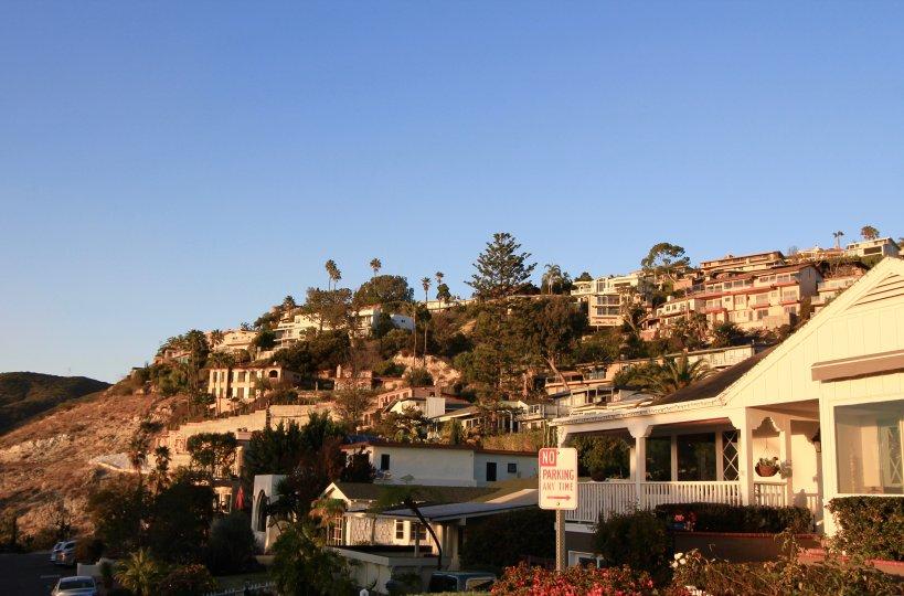 View of hillside in Mystic Hills Laguna Beach