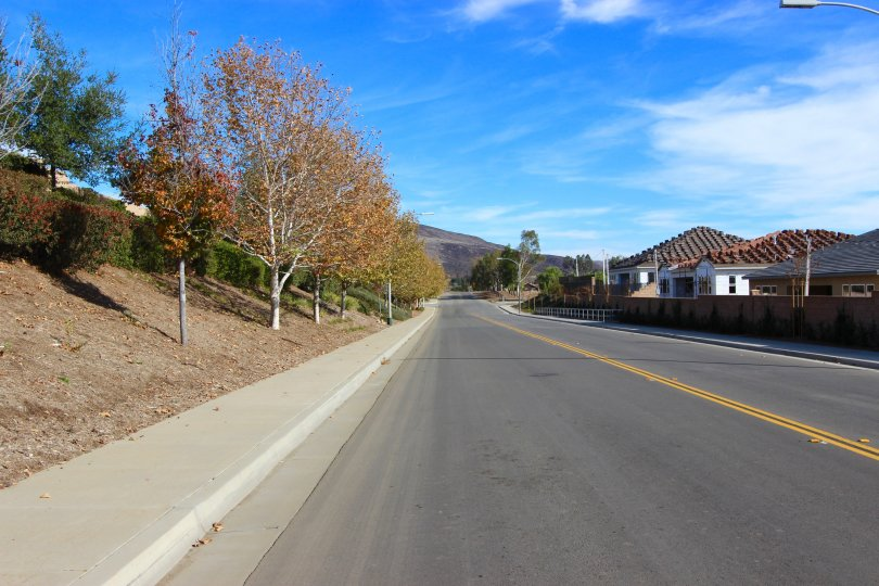 Mature landscaping lines a street in the Summit Ridge neighborhood