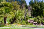 Mountain View Estates entry is lush with landscape and water features
