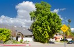 Two beautiful homes within the Amestoy Estates community of Encino Ca