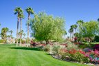 The landscaping within the Desert Shores community is impeccably maintained
