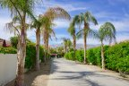 Lush bushes and palm trees line a street in La Quinta Fairways