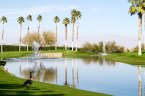 Geese sit lakeside at Ironwood Country Club in Palm Desert