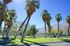 Palm Trees dot the landscape at Ruth Hardy Park