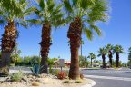 Palm trees dot the landscape at Sunrise Palms