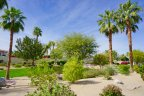 Palm trees dot the landscape at La Terraza in Rancho Mirage