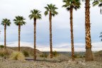 Palm Trees dot the community of Villas of Mirada in Rancho Mirage