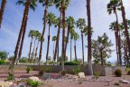 Palm Trees dot the Wilshire Palms community in Rancho Mirage