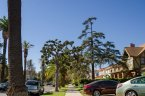 La Fayette Square is a walk friendly community in Los Angeles