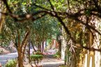 A lushly landscaped sidewalk offers relaxation to residents of Laurel Canyon