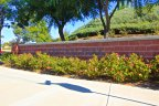 Red Brick accents are found throughout the community of Central Park in Murrieta CA