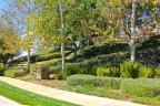 Mature landscaping exists all throughout Greer Ranch