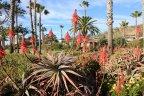 Flora and green belt in Montage Laguna Beach