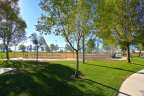 Trees and a baseball diamond at Rancho Bella Vista in Murrieta Ca