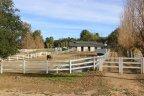 Horse are in Rancho Capistrano