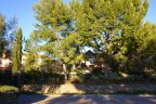 Trees and landscaping at the entrance to Tesoro Villas Newport Coast CA