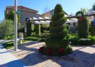 Beautiful Hedges within the community of Tiburon